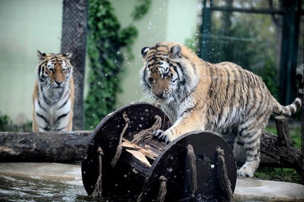 حديقةالحيوان
